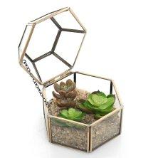 Faceted Hexagonal Clear Glass & Brass Metal Hinged Top Lid Plant Terrarium Box