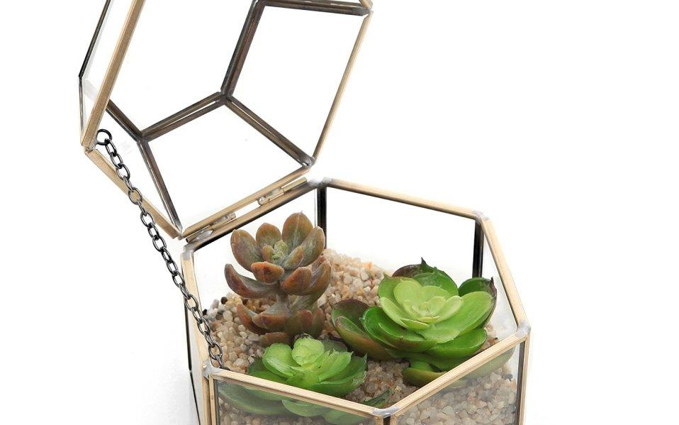 A Terrarium Box Is the Perfect