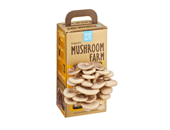 growing oyster mushrooms Back to Roots