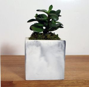 Feen and Neen Tilted Cement Planter