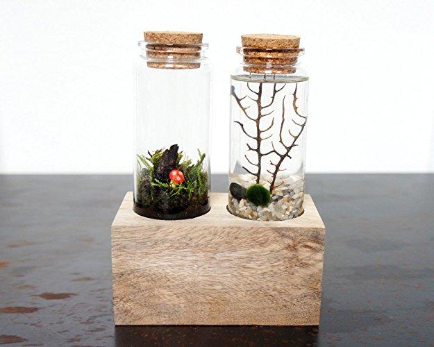 Moss + Twig terrarium kit Land