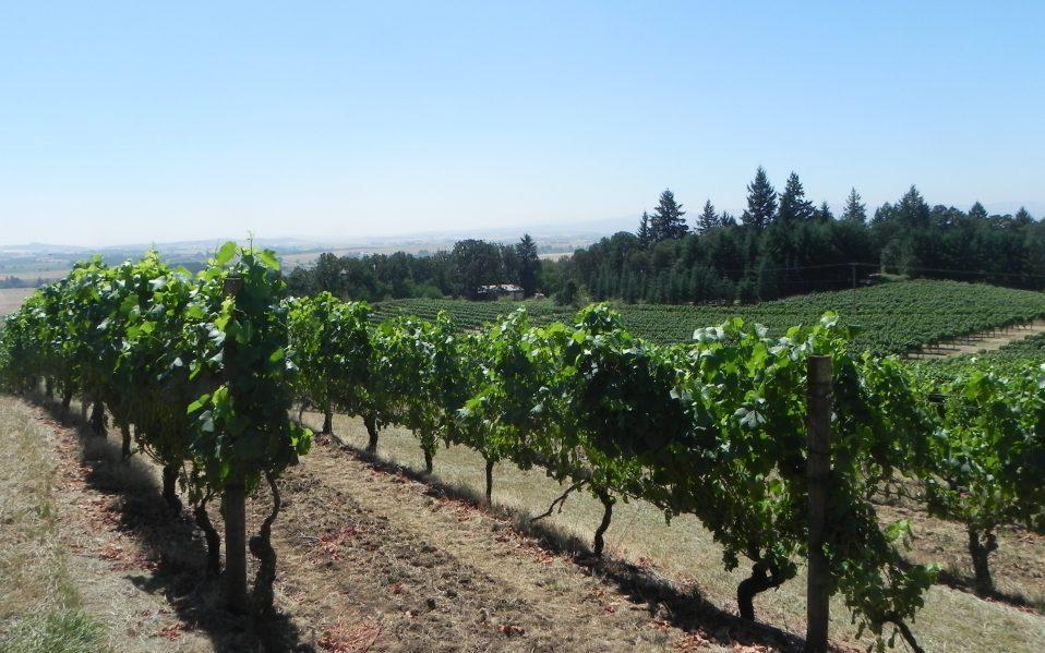 Wine Tasting in Portland Oregon: Willamette