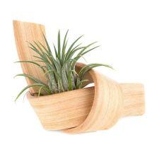 Mini_Knot_planter