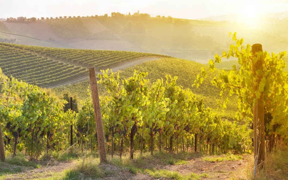 The Most Popular California Wines Sold