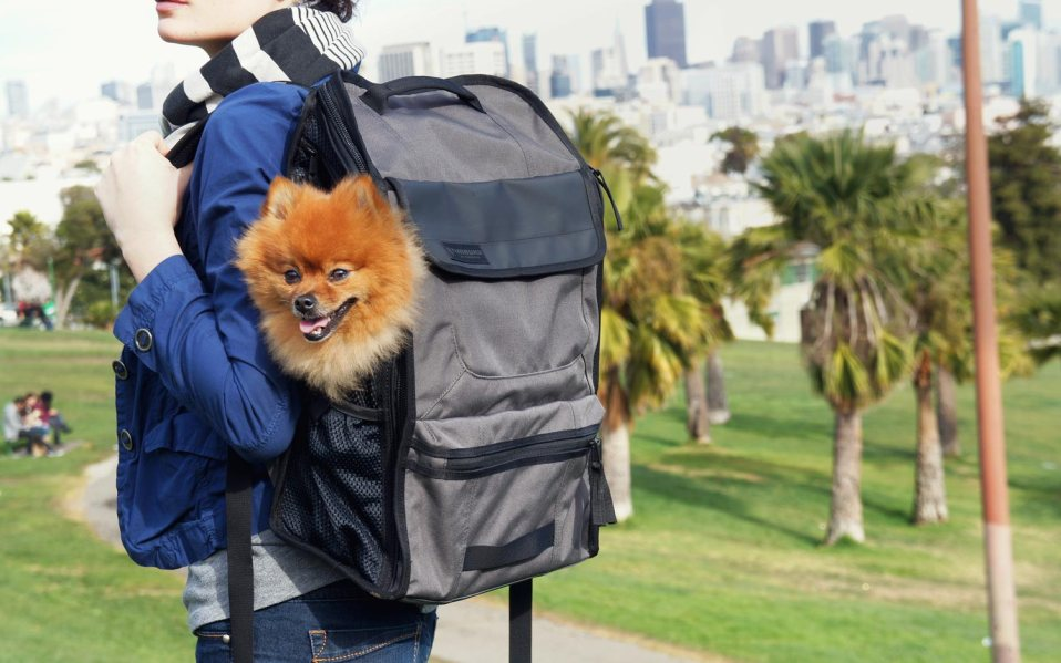 The Pet Carrier That's Most Comfortable