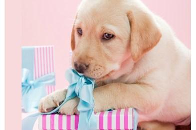 puppygift