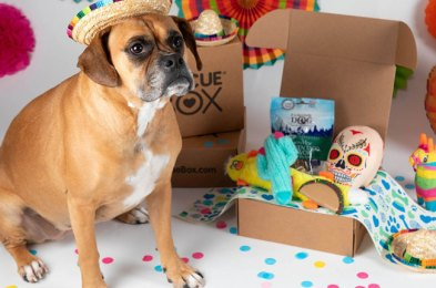 spoil your pet with one of these subscription boxes