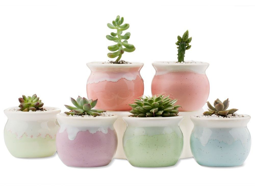 Set of 6 Ceramic Succulent Pots and Planters for Small Indoor Planting