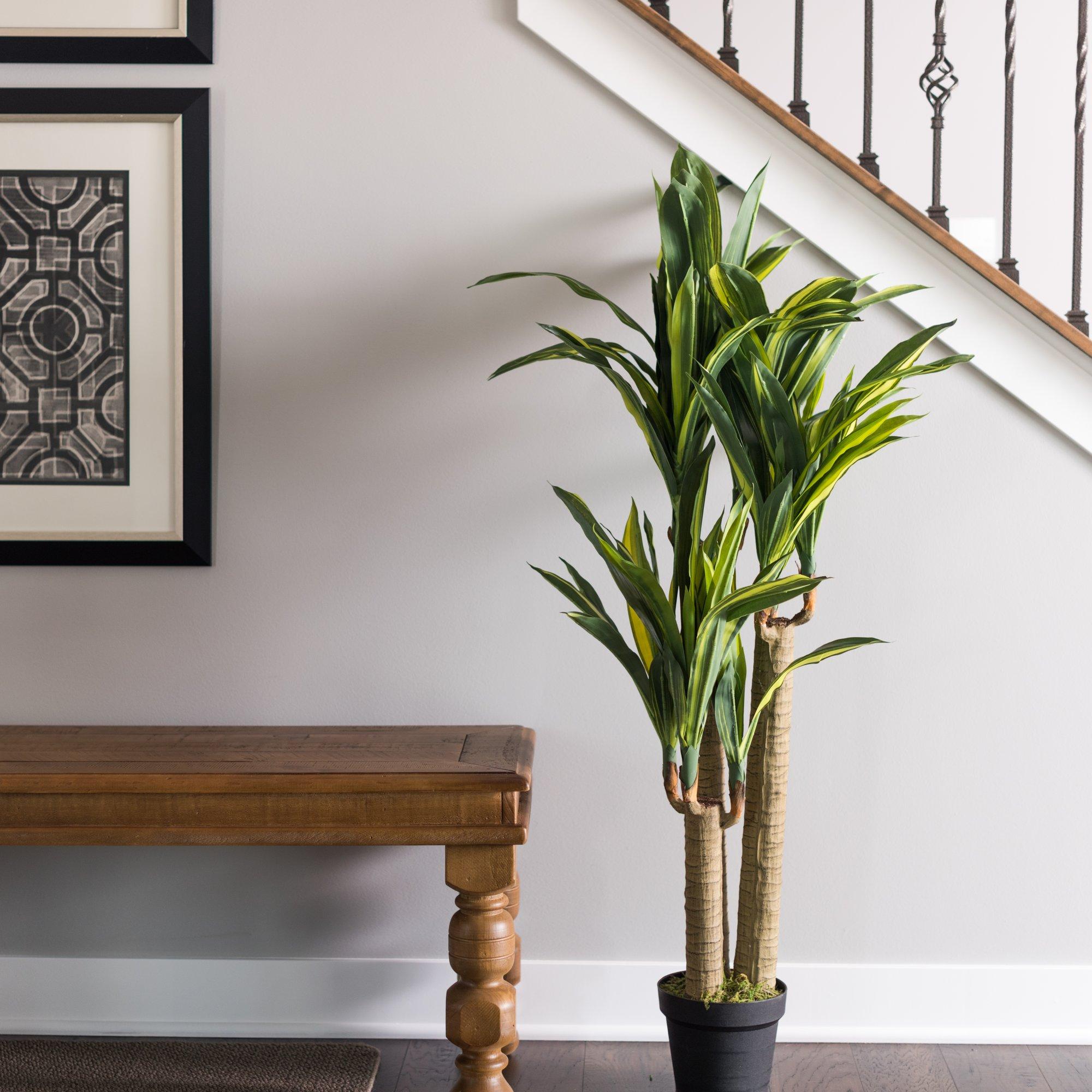 Indoor Plant Decor Wayfair