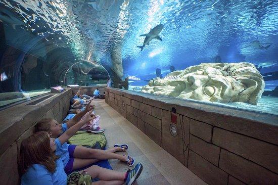 sea-life-minnesota-aquarium