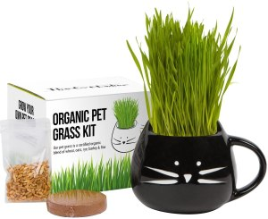 cat grass growing kit, gifts for cat lovers