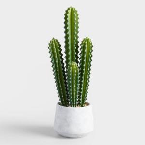 best gifts under $50 - Indoor Cactus Plant