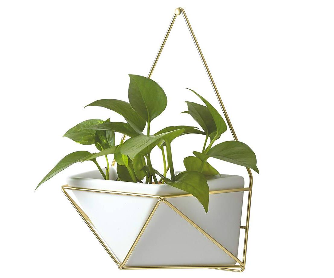Target Geometric Succulent Holder