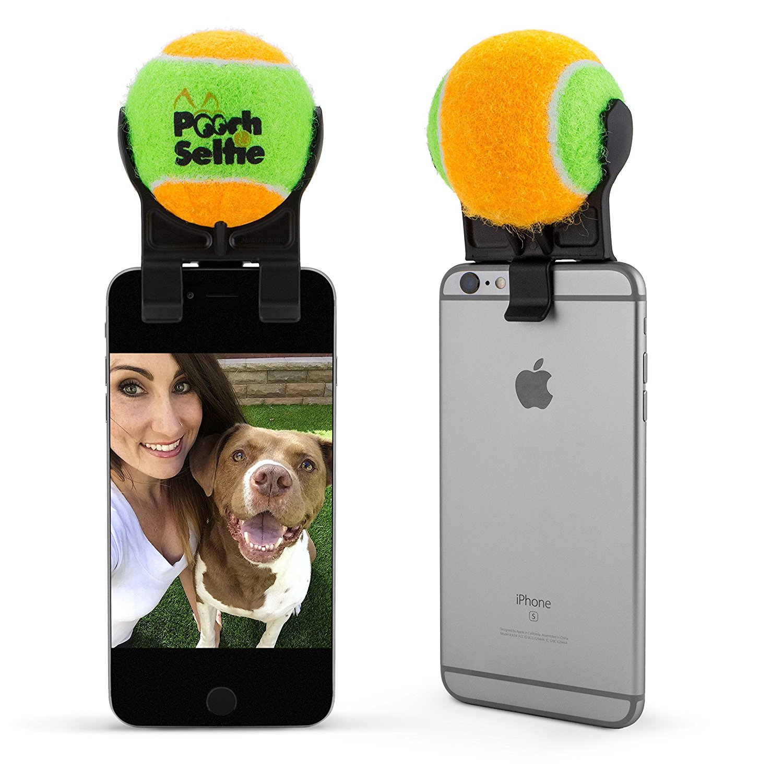 Dog Picture Pooch Selfie