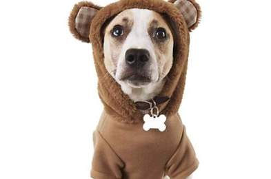 winter pet outfits