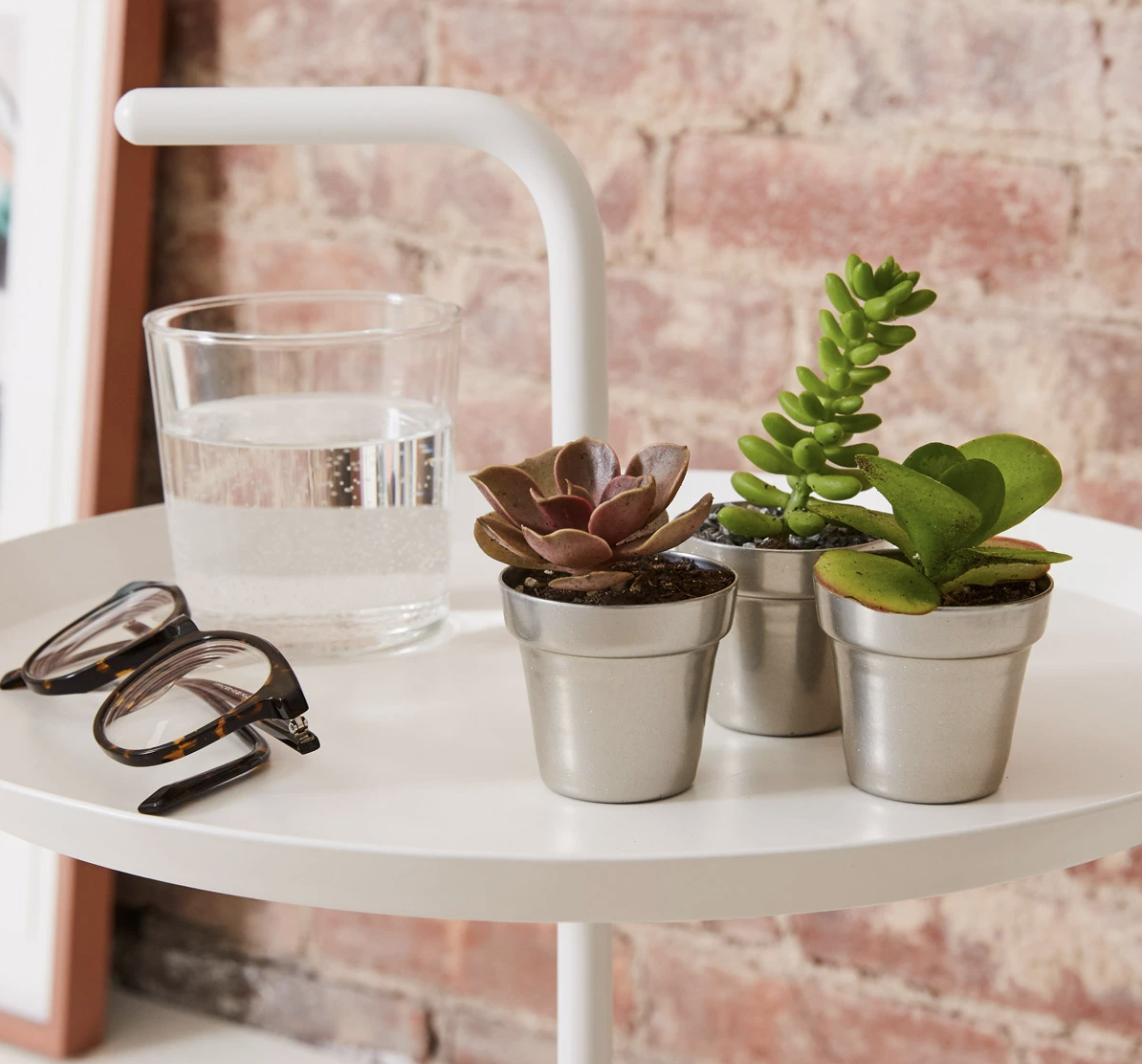 Trio of succulents in pots