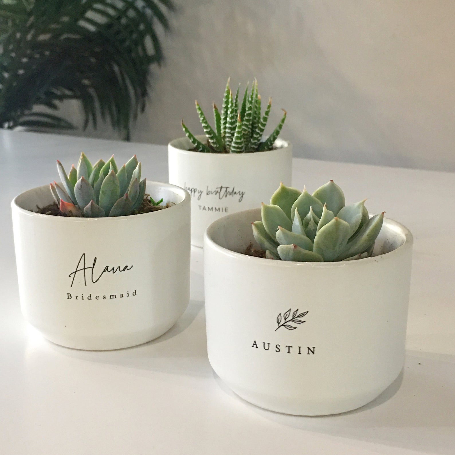 succulents in personalized pots