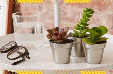 buy-succulents-online