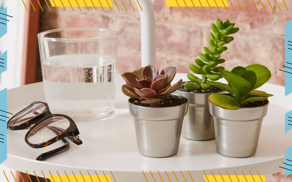 Three Small Succulents on Counter