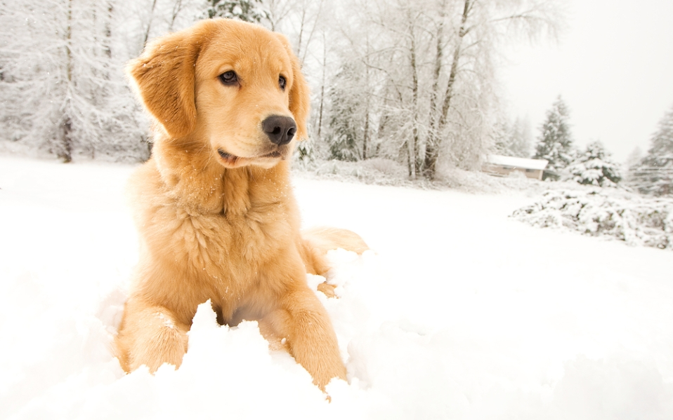 best winter boots for dogs