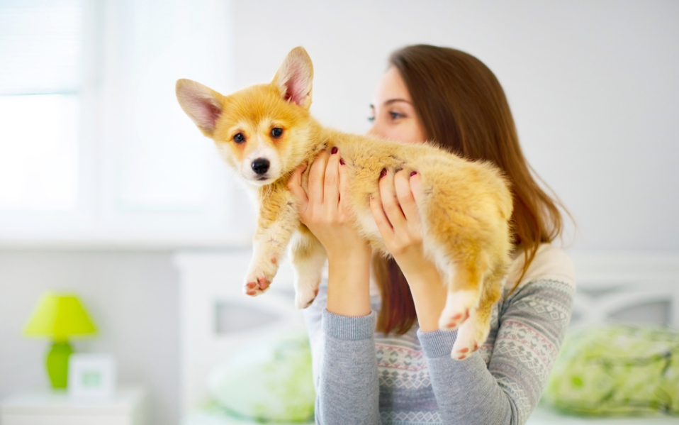 gifts for corgi lovers