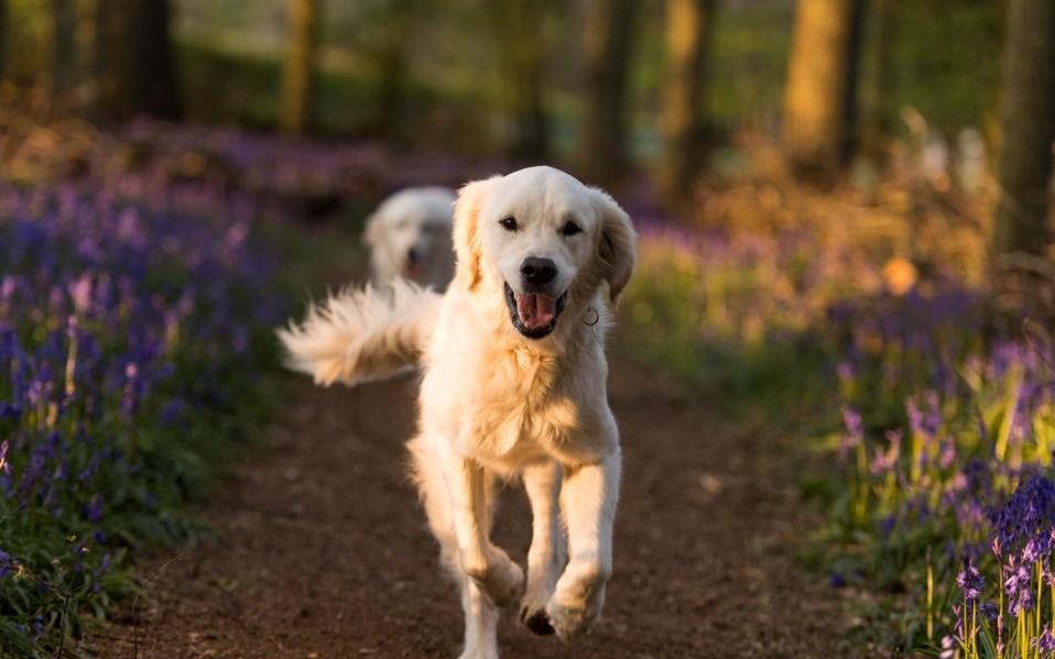 best dog dna tests