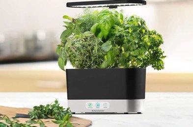 the 11 best indoor herb gardens for urban foodies
