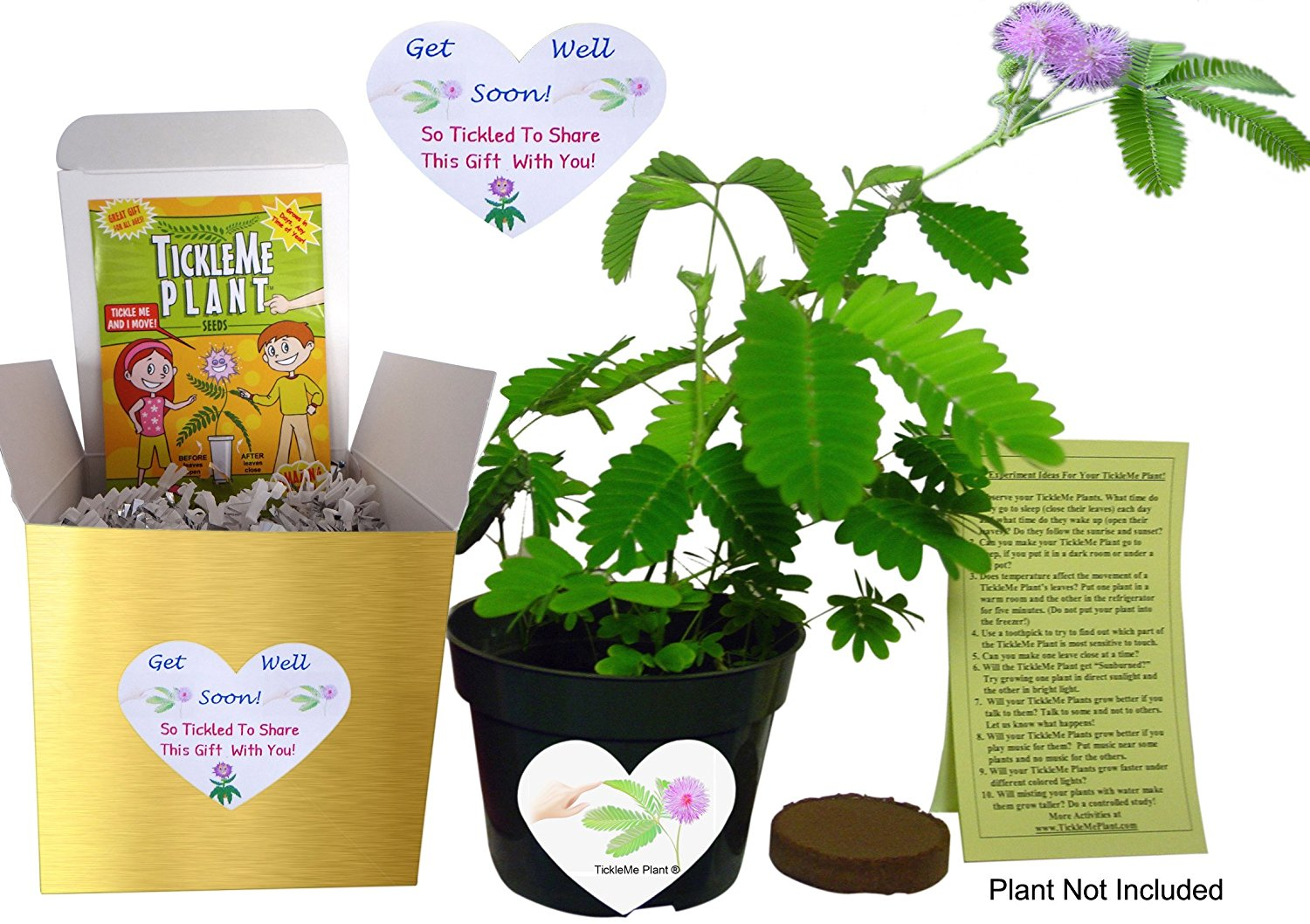 get well soon best gifts to give sick friends house plant kit