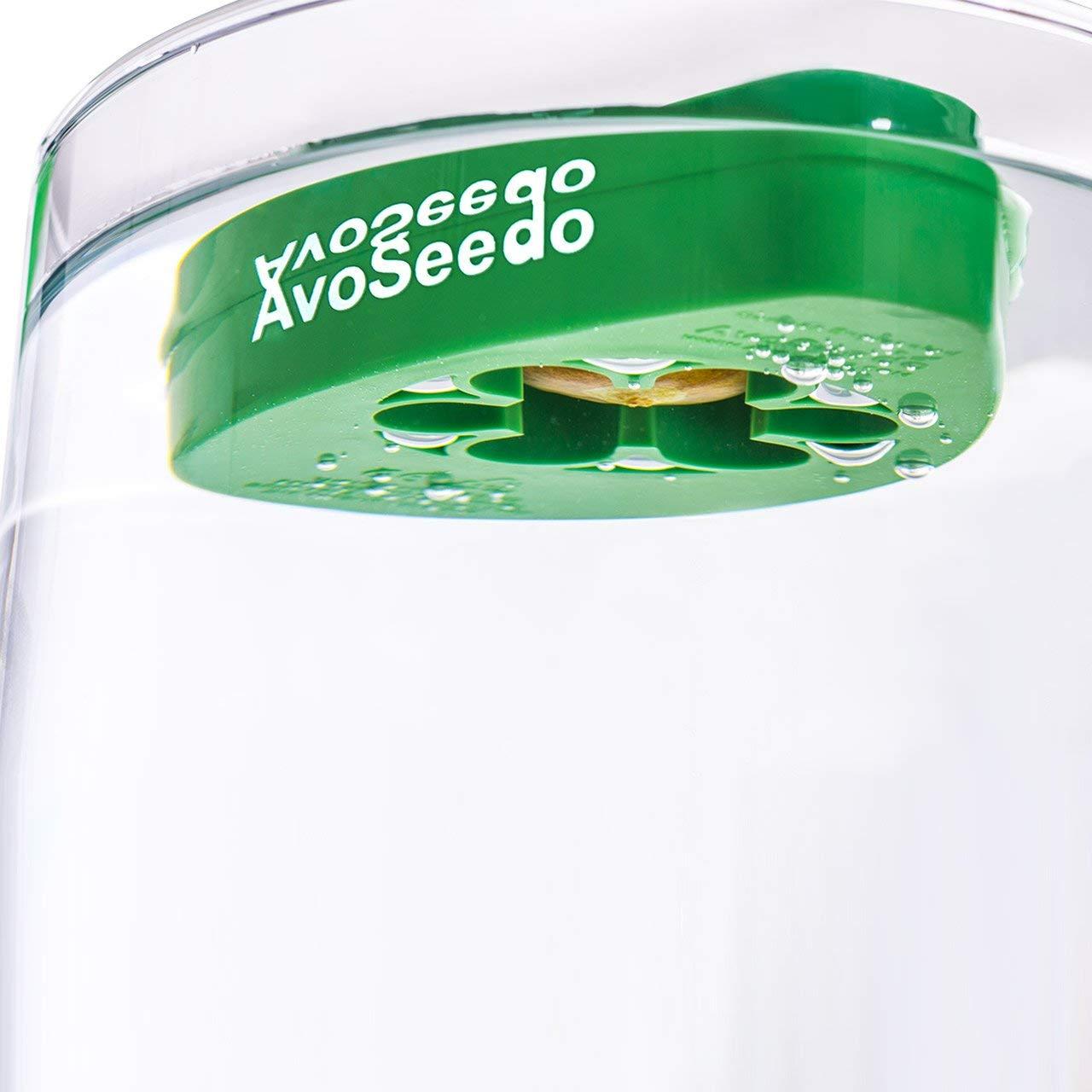 how to grow avocado tree in a bowl kit avoseedo