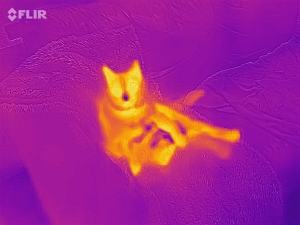 flir one pro thermal camera images