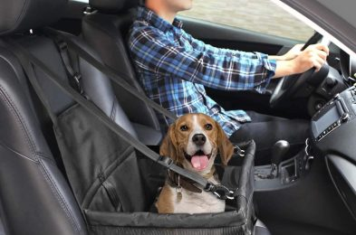 best dog car seat booster safety harness