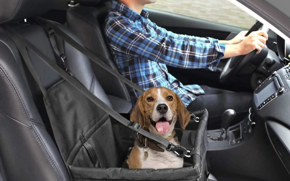 best dog car seat booster safety