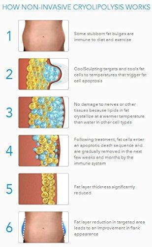 fat freezer review weight loss belt fat burning