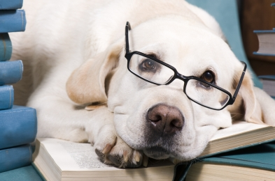 Books For New Pet Owners