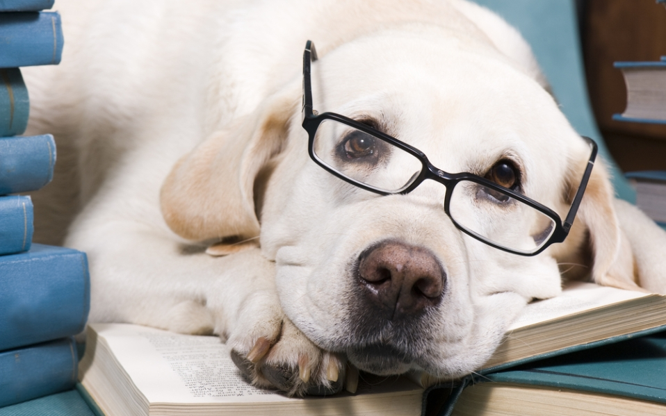 New Pet Owner Training Books