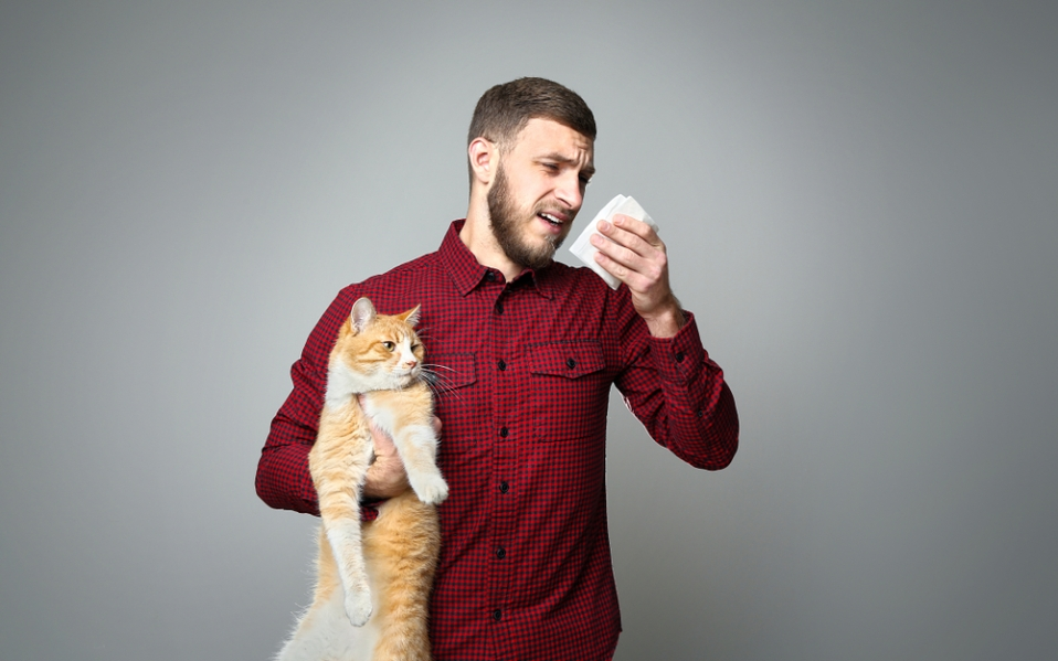 best cat allergy treatments