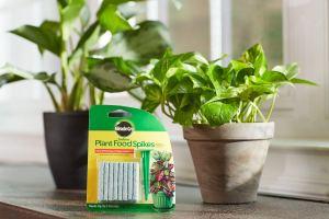 indoor plants essentials food spikes