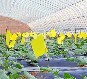indoor plants essentials bug traps