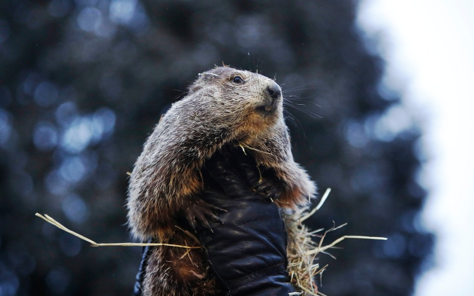 groundhog day 2019 results