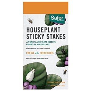 indoor plants essentials
