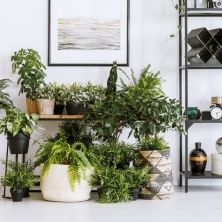 house plant essentials you didn't know you needed