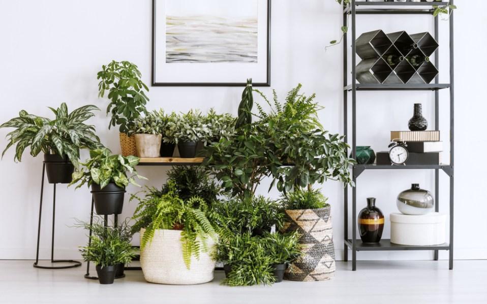 indoor plants essentials growing lights