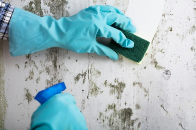 ways to get rid of mold in your house