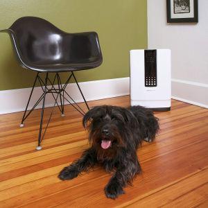 best smart air purifiers hathaspace