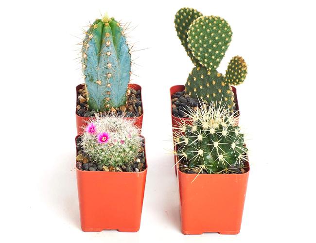 best indoor plants amazon