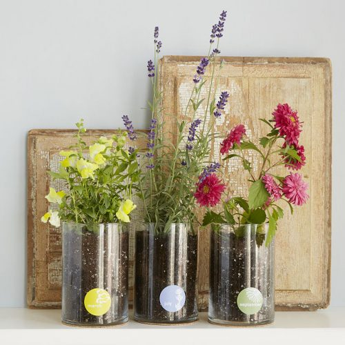 Birth Month Flower Grow Kit, unique mother's day gifts