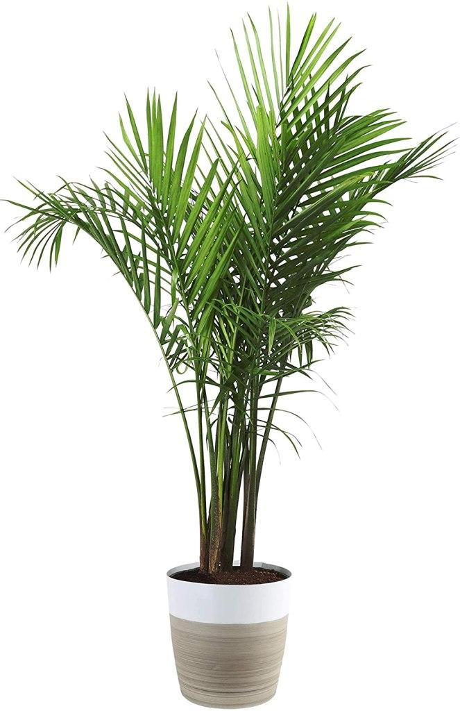 indoor plants amazon