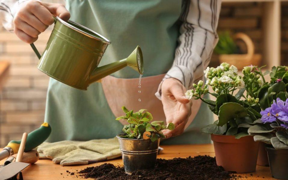 Best Plant Fertilizers