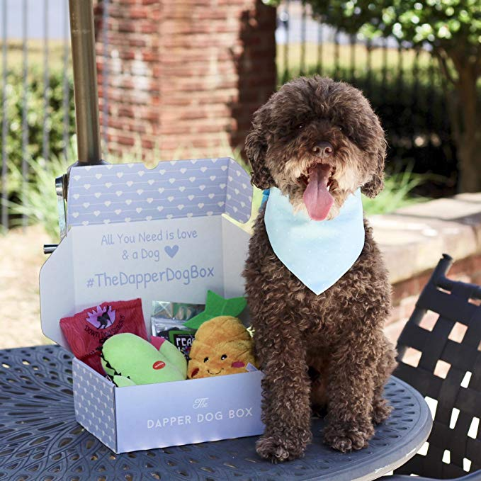best last minute gift ideas, dapper dog subscription