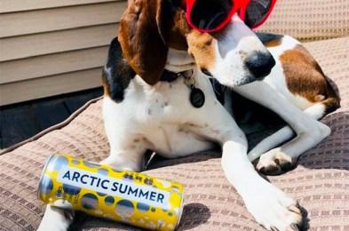 arctic summer hard seltzer